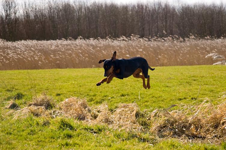 spring in 't veld